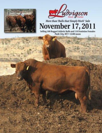 'Bulls that Simply Work' Sale November 17, 2011 - Barkingapple.com
