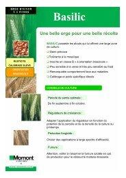 Basilic - MOMONT