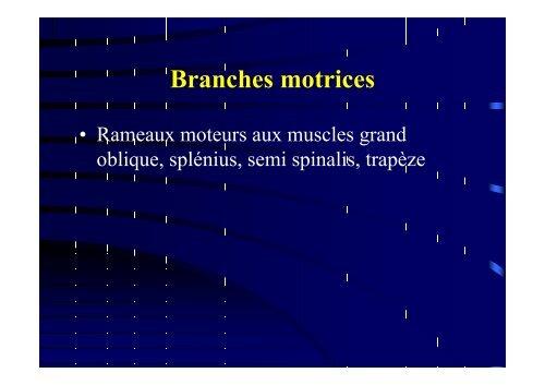 Anatomie du grand nerf occipital - sofmmoo
