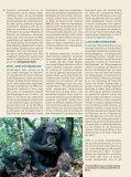 Wie kam Homo sapiens vom Affen los? 1 - Scinexx - Seite 2