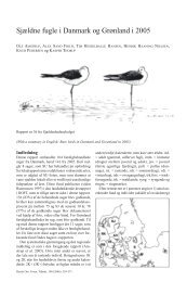Sjældne fugle i Danmark og Grønland i 2005 - Zoologisk Museum