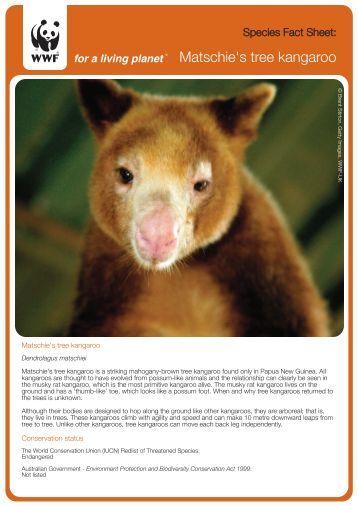 Matschie's tree kangaroo - wwf - Australia
