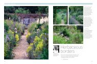 Herbaceous borders - Arne Maynard Garden Design