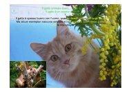 Il gatto animale libero…. Libero… Il gatto è un essere vivente. Il ...