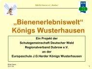 Konzept Bienenerlebniswelt - Märkisches Haus des Waldes