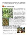 PROCESAMIENTO Y CONSUMO DE SEMILLA ... - Ideassonline.org - Page 3