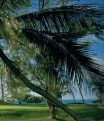 Le Touessrok Golf Course, Ile Maurice - iHaveNotBeenThere - Page 2