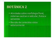 Atividades sobre a aula 4 - Fernando Santiago dos Santos
