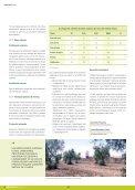 L'olivera - RuralCat - Page 6