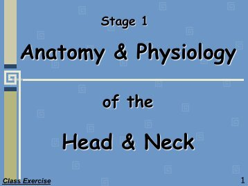 Anatomy & Physiology of the Head & Neck - Randwick College Wiki