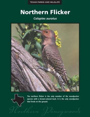 Northern Flicker - The State of Water