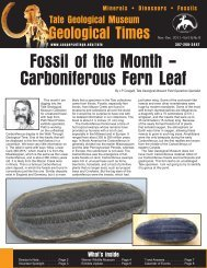 Fossil of the Month – Carboniferous Fern Leaf - Casper College