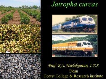 1.Jatropha - Tamil Nadu Agricultural University