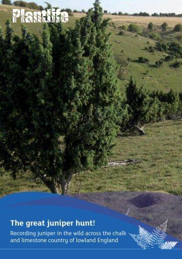 The great juniper hunt! - Plantlife