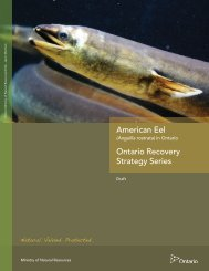 American Eel - Ministry of Natural Resources - Ontario.ca