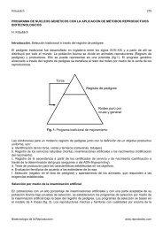Toros Registro de pedigree Rodeo puro por cruza y ... - Reprobiotec