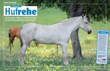Mein Pferd - Pferdeklinik Burg Müggenhausen