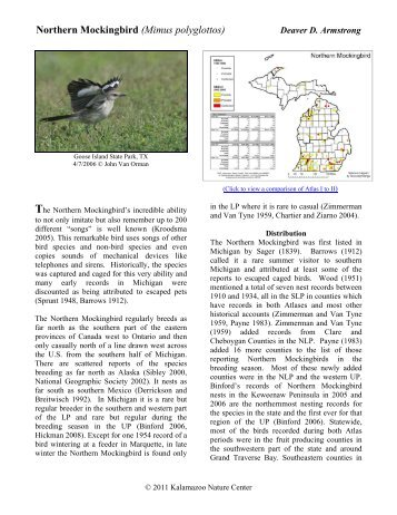 Northern Mockingbird - Michigan Breeding Bird Atlas Website