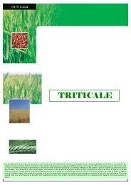 tableau comparatif triticale - MOMONT