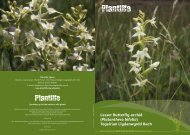 Lesser Butterfly-orchid - Plantlife