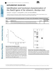 Identification and functional characterization of the Rad23 gene of ...