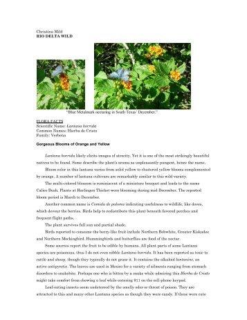 """Lantana horrida.pdf - Christina Mild's """"Rio Delta Wild"""""""