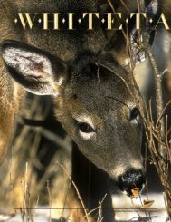 Whitetails 101 - New Hampshire Fish and Game Department