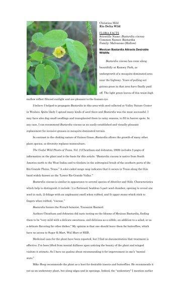 "Bastardia viscosa - Christina Mild's ""Rio Delta Wild"""