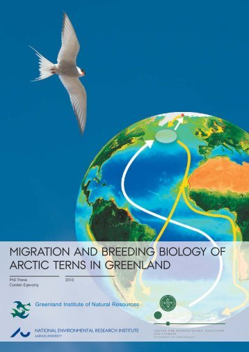 Migration and breeding biology of Arctic terns in Greenland
