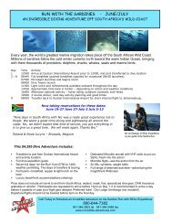 Sardine Run Diving Adventure, South Africa - Incredible Adventures