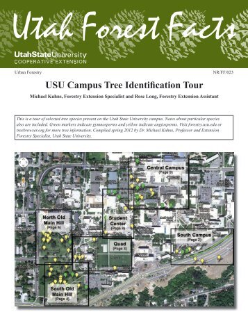 USU Campus Tree Identification Tour - Forestry - Utah State University