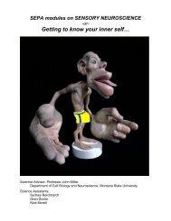 Intro to Neuroscience - Montana State University