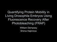 Quantifying Protein Mobility in Living Drosophila Embryos Using ...