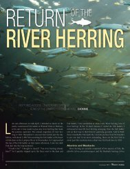 Return of the River Herring - New Hampshire Fish and Game ...