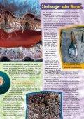 Young Panda-Aktuell, Ausgabe 07.2012 (Muscheln) - Seite 3