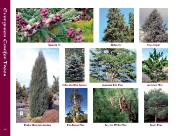Evergreen and Conifers