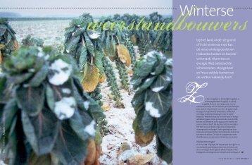 de verse winter groente van Hollandse bodem zit ... - t Schrijvertje