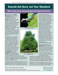 Emerald Ash Borer and Your Woodland