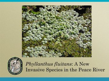 Phyllanthus fluitans - Florida Invasive Species Partnership