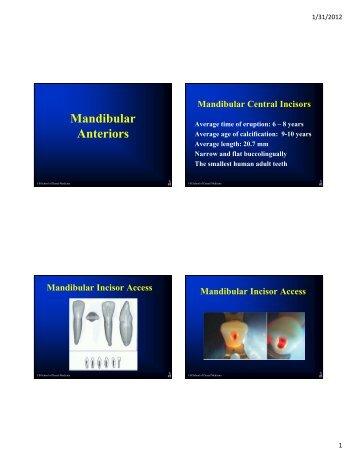 Mandibular Anteriors