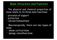 Bone Structure and Function - SunHope.it