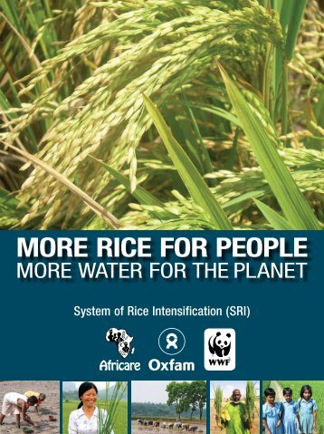 System of Rice Intensification (SRI) - Coraf