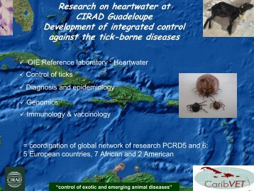 Ticks research CIRAD - Caribvet