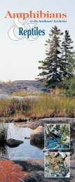 Amphibians & Reptiles in the NWT Pamphlet - Environment and ...