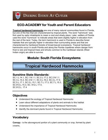 Tropical Hardwood Hammocks Lesson Plan - Deering Estate at Cutler