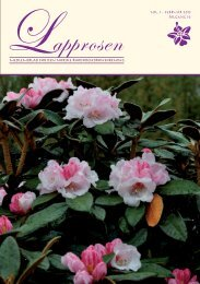 Lapprosen 1/2013 side 20 - Den norske Rhododendronforening