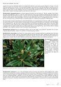 Lapprosen 1/2013 side 20 - Den norske Rhododendronforening - Page 5