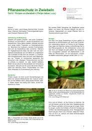 Pflanzenschutz in Zwiebeln, Teil 2: Thripse an Zwiebeln (Thrips ...