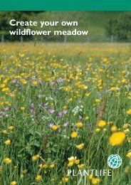 Create your own wildflower meadow - Plantlife
