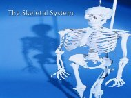 The Skeletal System - Fall River Public Schools